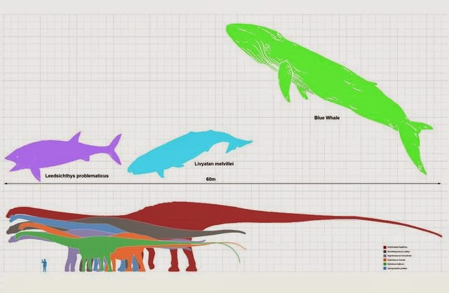 Amphicoelias Fragillimus Vs Blue Whale