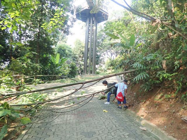hutan kota kuala lumpur malaysia