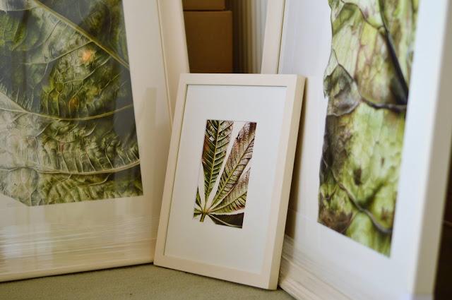 Close up on botanical paintings by Jess Shepherd