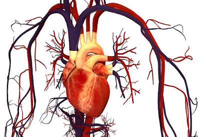 https://www.notasrosas.com/Lo Que Debemos Saber Sobre El Cuerpo Humano