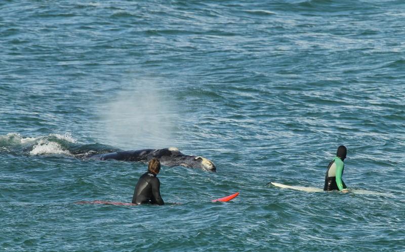 surfista ballena 03