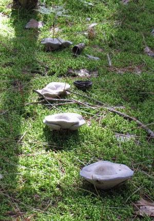 line of mushrooms
