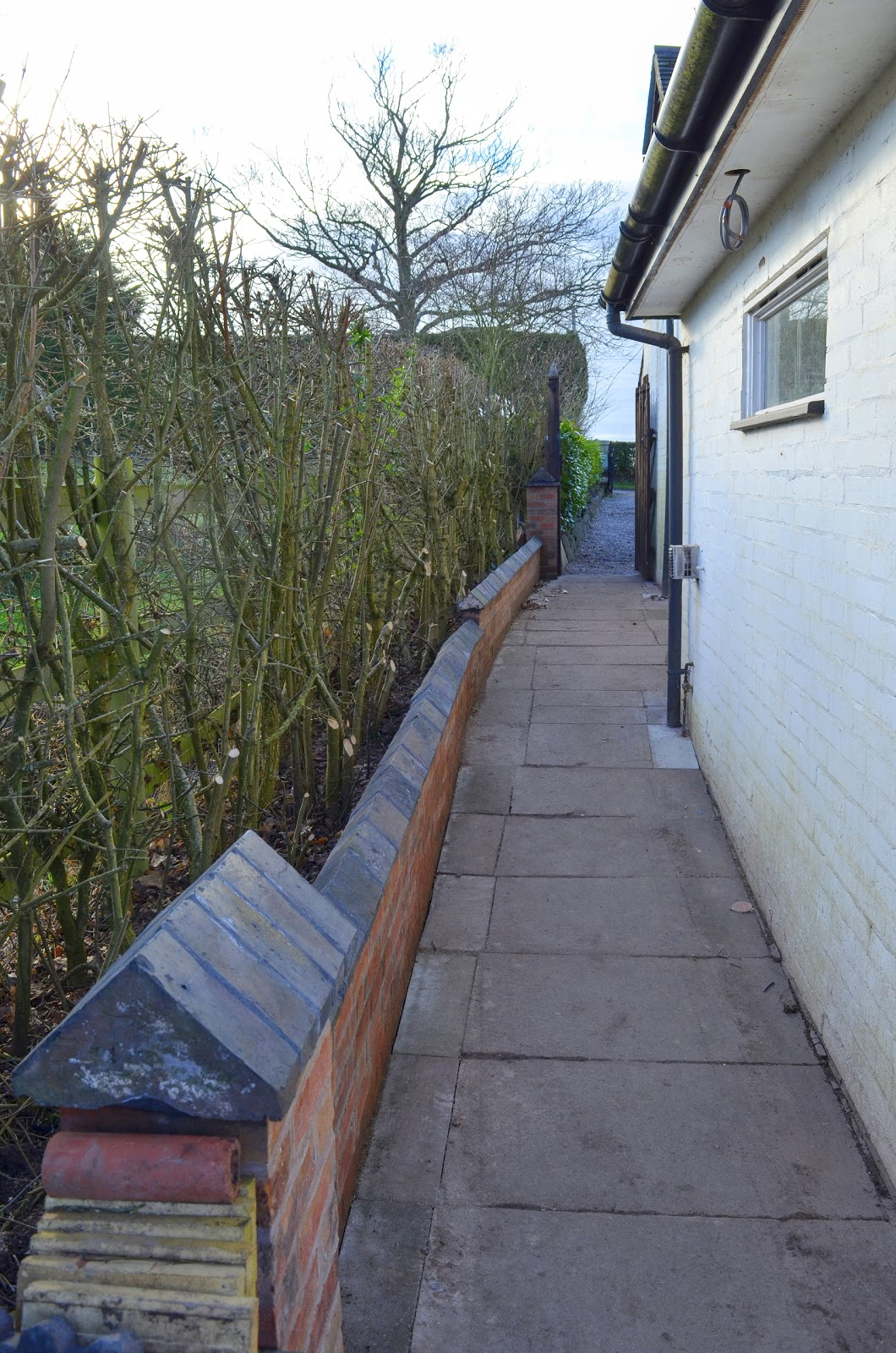Chrisu0027s Wall Behind The Garage With Its Row Of Little Black Witchesu0027 Hats  Is Looking So Good, We Trimmed The Hedge Behind It Sloping It Back To Allow  In ...