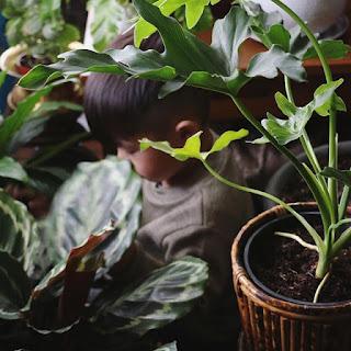 Jakie gatunki roślin wybrać?
