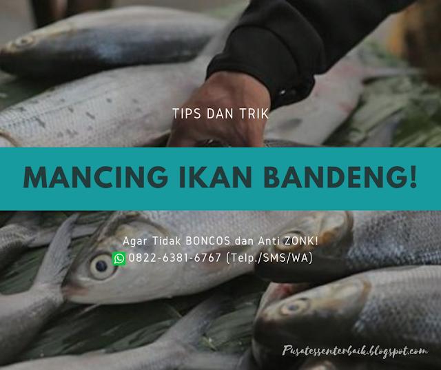 https://pusatessenterbaik.blogspot.com/2020/03/tips-dan-trik-mancing-ikan-bandeng-agar-tidak-boncos.html