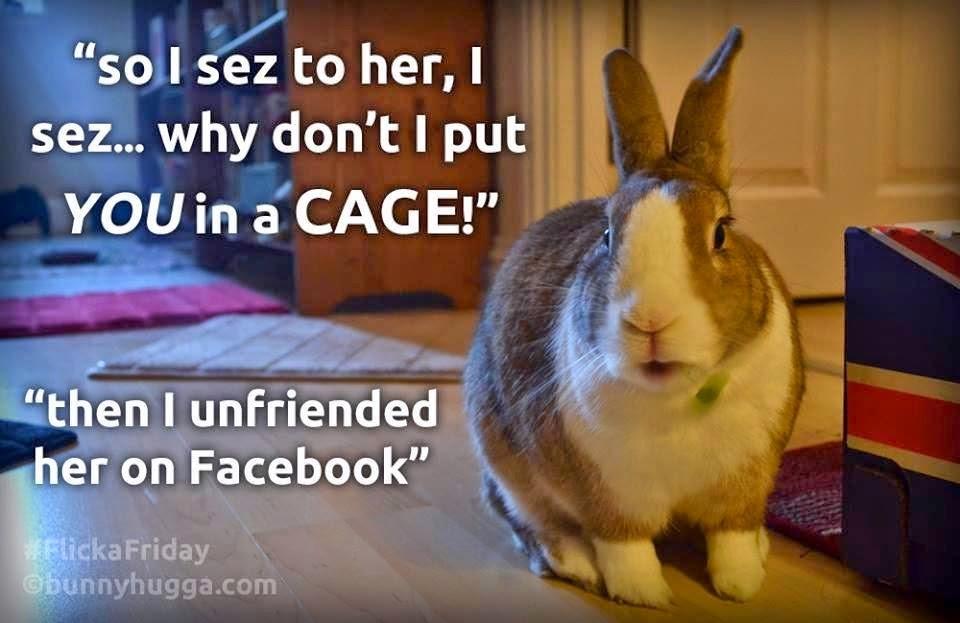 Rabbit Ramblings: Bunny advocacy memes