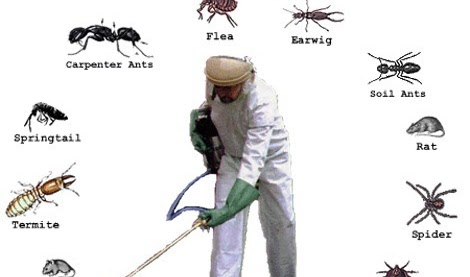 Pest Control Problems During the Winter