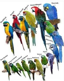 Jenis-Jenis Burung Paruh Bengkok
