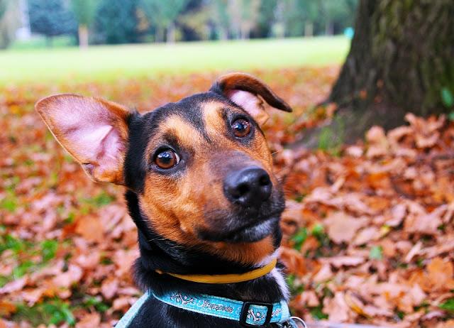 ¿Sabes cómo son las heces de un perro sano?