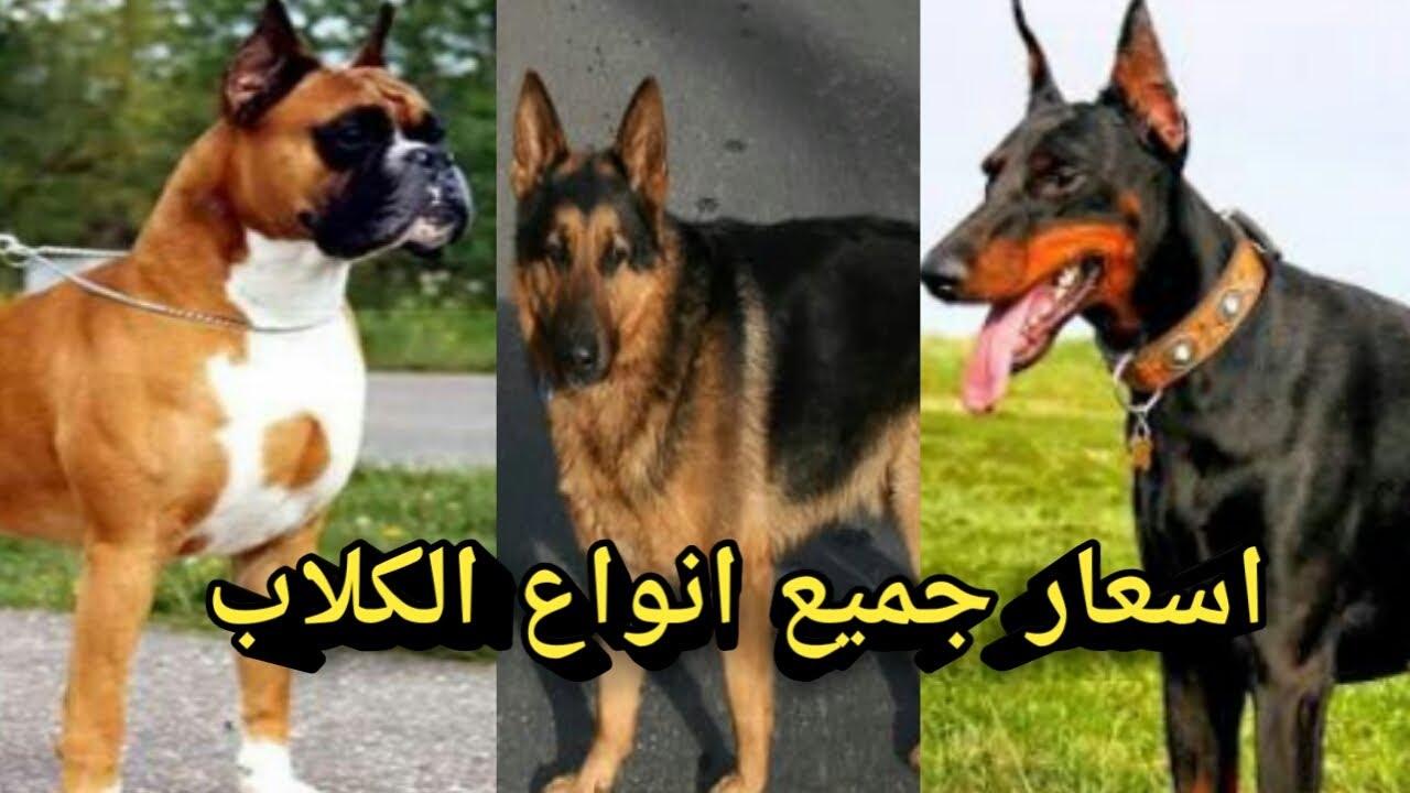 أسعار الكلاب في سوق الجمعة