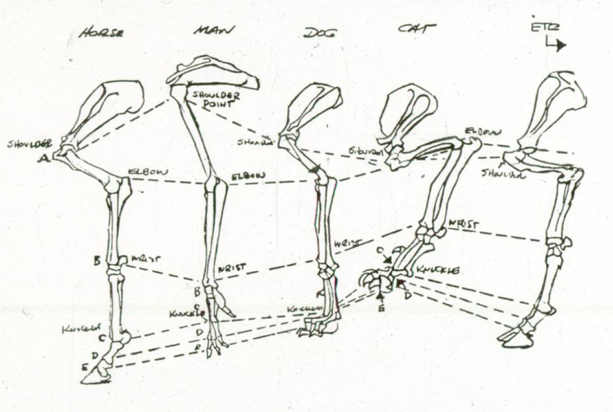 The Line Test Journals: How to Key a Dog's Walk
