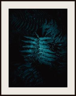 plakat, plakat z paprocią, plakat z paprotką, plakat z paprocią leśną, plakat leśny, plakat z roślinami, plakat roślinny, plakat pionowy, plakat pionowy A3, plakat darkmood