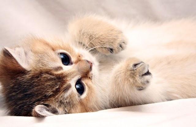 Halálra rugdostak egy kiscicát Ópályiban (videó)