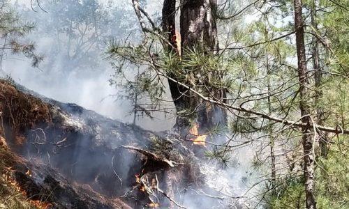 Υπό έλεγχο έχει τεθεί η φωτιά που ξέσπασε το μεσημέρι της Δευτέρας σε δασική περιοχή, κοντά στη Βούρμπιανη.