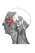 Músculos de la cara imagen