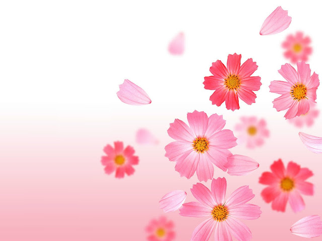Unduh 800+ Background Kartu Nama Pink HD Paling Keren