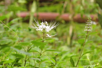 White Flower & Green Leaf