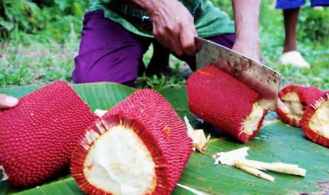 Khasiat Buah Merah Papua Bagi Kesehatan