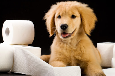 how-to-treat-your-dog-diarrhea