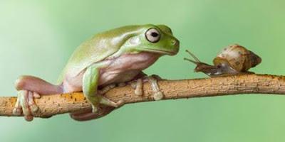 Cerita Seekor Katak dan Siput