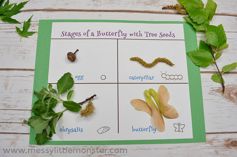 Life cycle of a butterfly printable for kids. Seed scavenger hunt