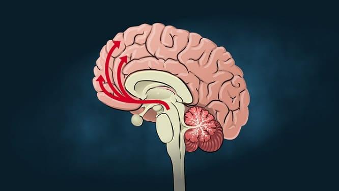 عجائب الدماغ البشري