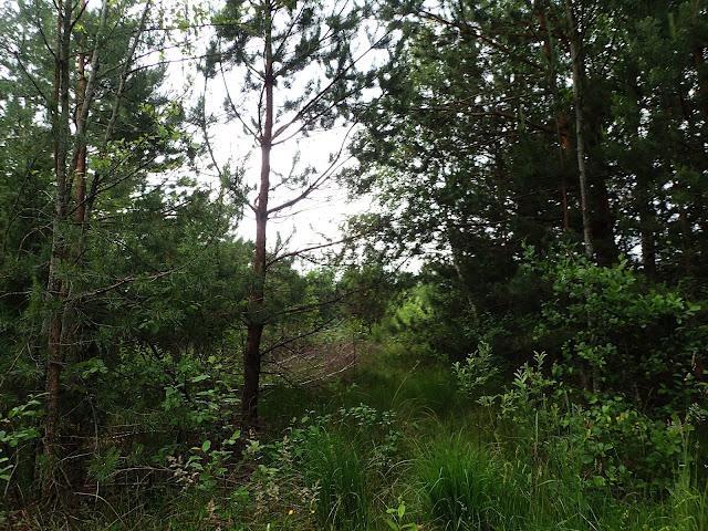 Polesie to bardzo zielona kraina!