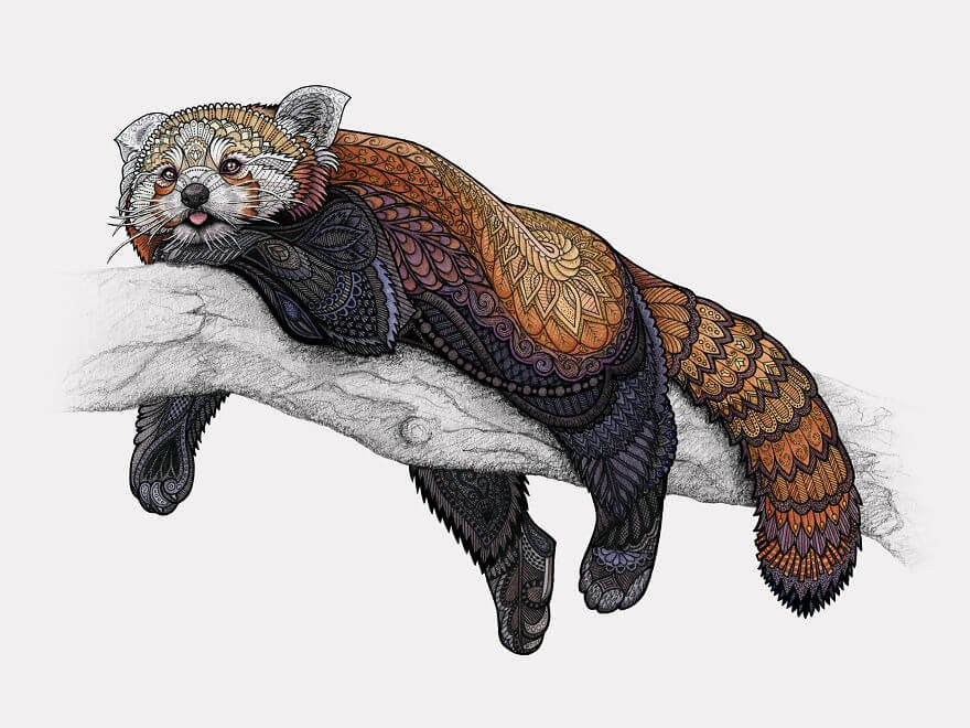 06-Red-Panda-Z-H-Field-Distinctive-Animal-Drawings-and-Paintings-www-designstack-co