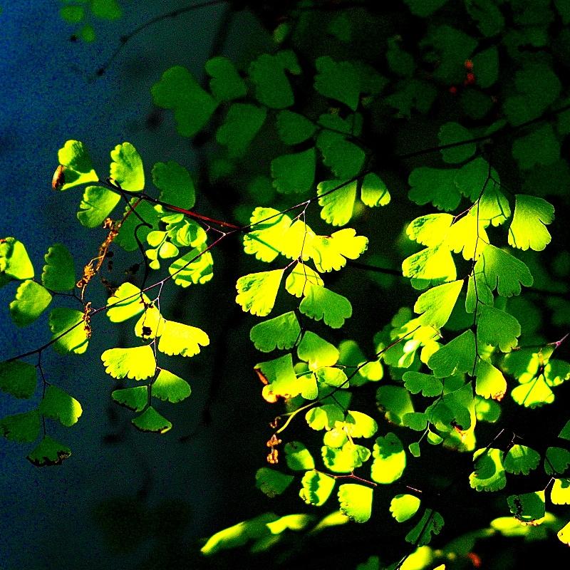 Digital Moments, Industar 61 L/Z 50mm F2.8 03