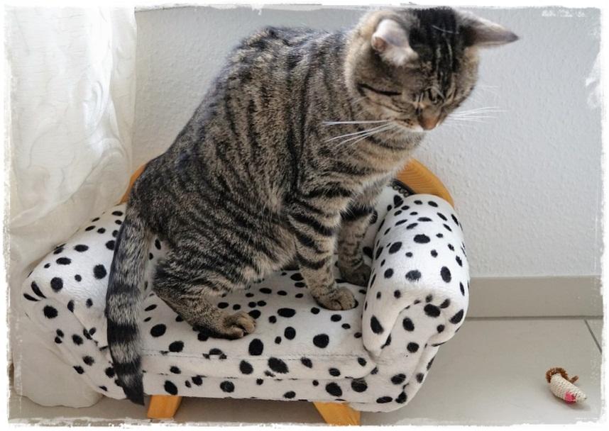 12 Penyebab Kucing Mencret Atau Diare Terus Menerus