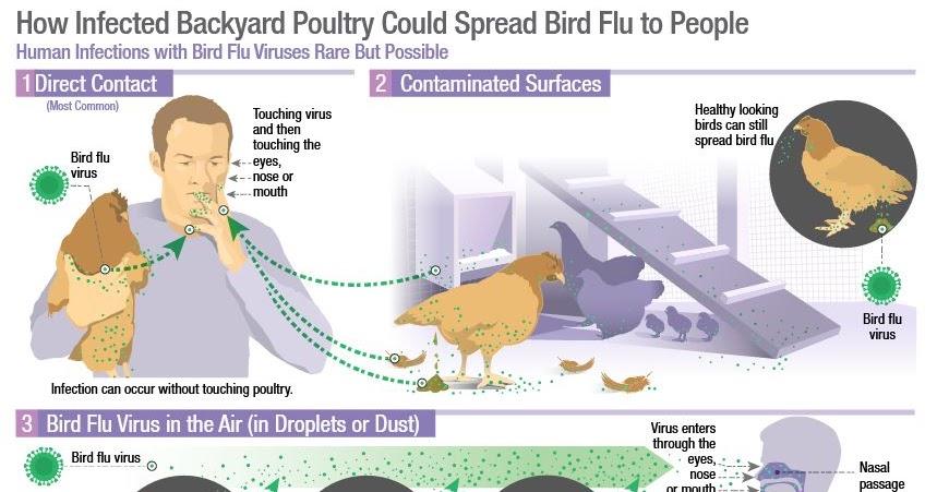 Avian Flu Diary Emer Microb Inf Avian Flu Co Infection In