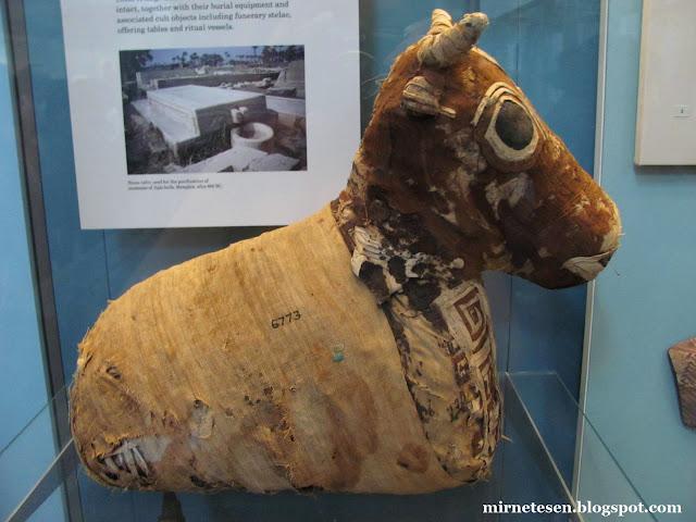 Британский национальный музей - египетский зал, мумия бычка
