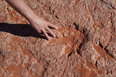 Dinosaur Tracks in Red Cliffs National Conservation Area, Utah.
