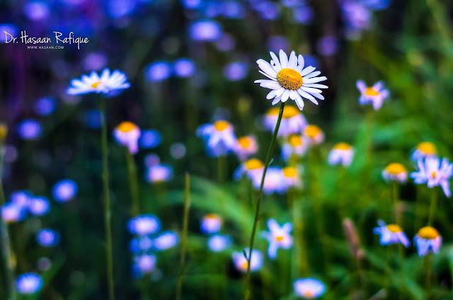 Photo: Flower at night