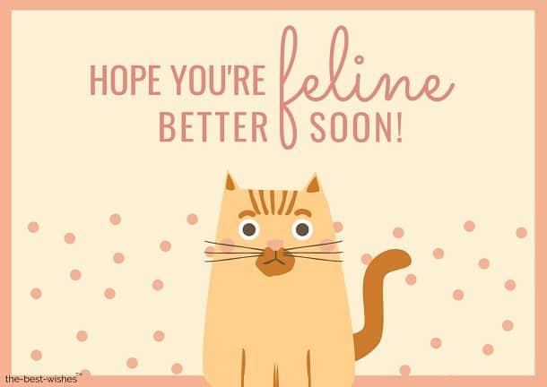 funny cat hope you're feline better soon