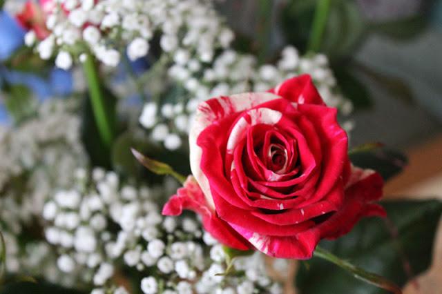 Blumenstrauß aus rot-weißen Rosen und Schleierkraut