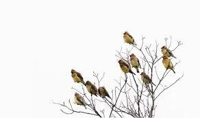 Phân tích khoa học đằng sau bí ẩn về những con chim sẻ rơi ở Bali