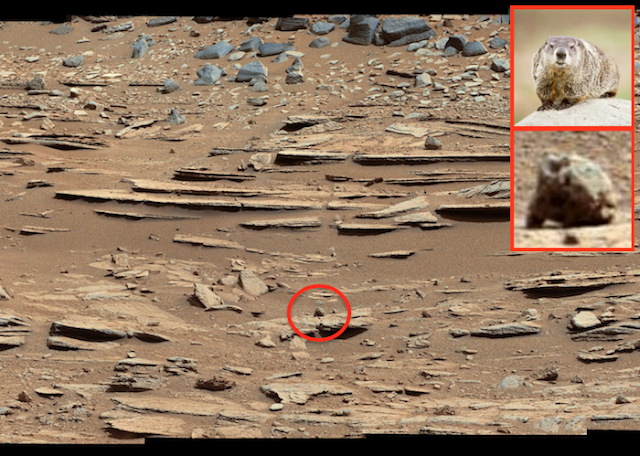 mars rover finds animal - photo #49