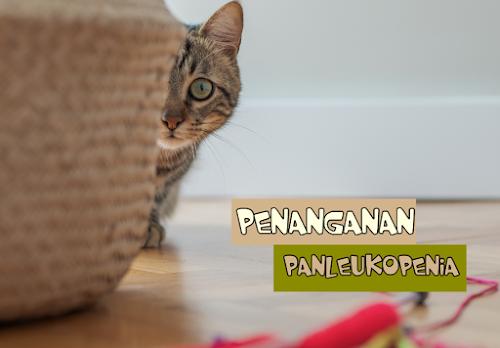 Feline Panleukopenia PDF