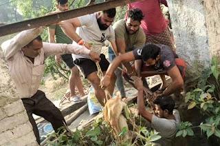 कुएं में गिरे कुत्ते को ग्रामीणों ने निकाला  | #NayaSaberaNetwork
