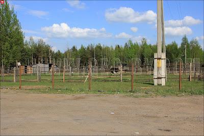 Черноручье, страусиная ферма
