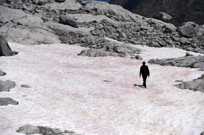 Fenomena Salju di Pegunungan Alpen yang Berubah Menjadi Warna Pink
