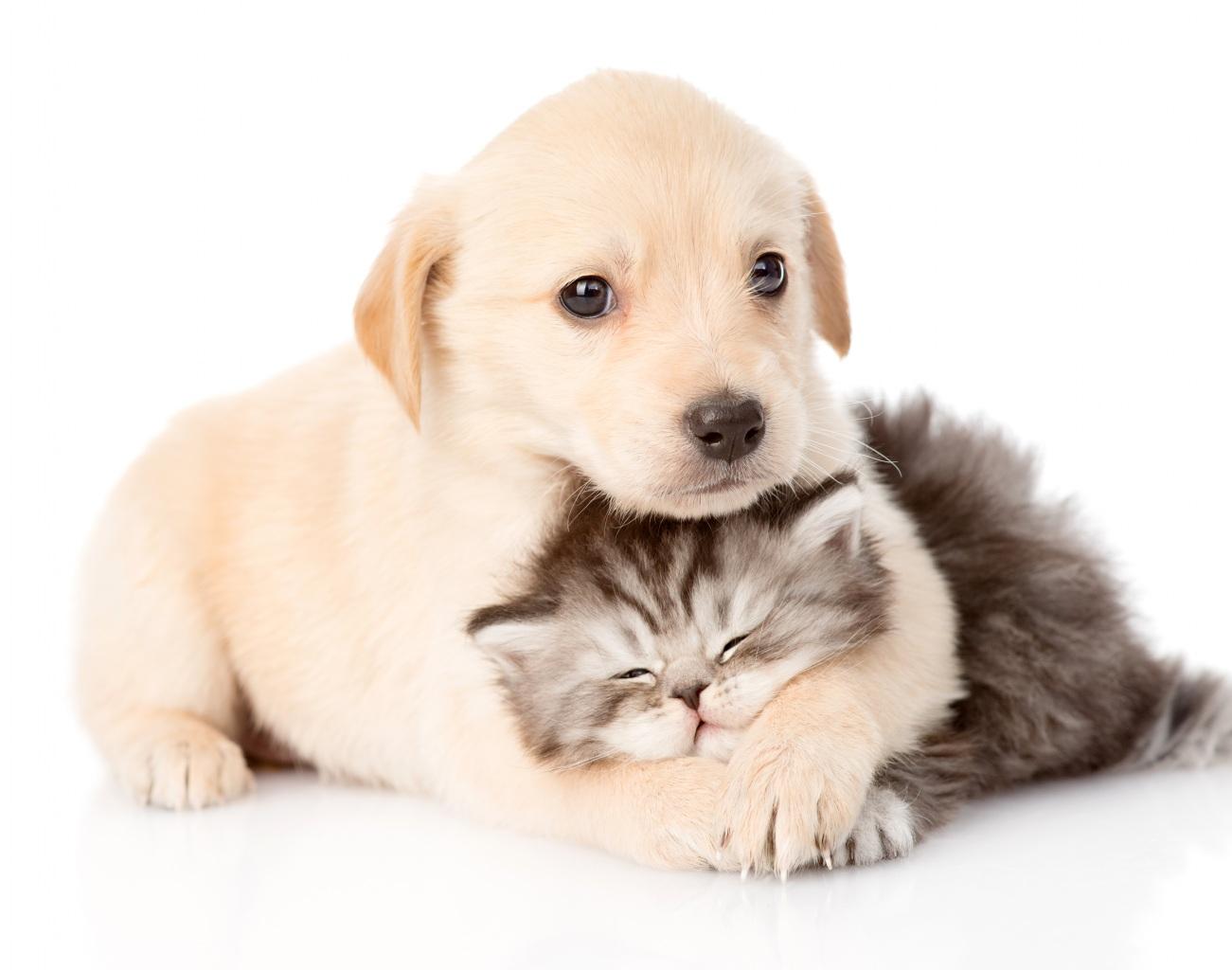 Znalezione obrazy dla zapytania zbiórka dla zwierząt szkoła