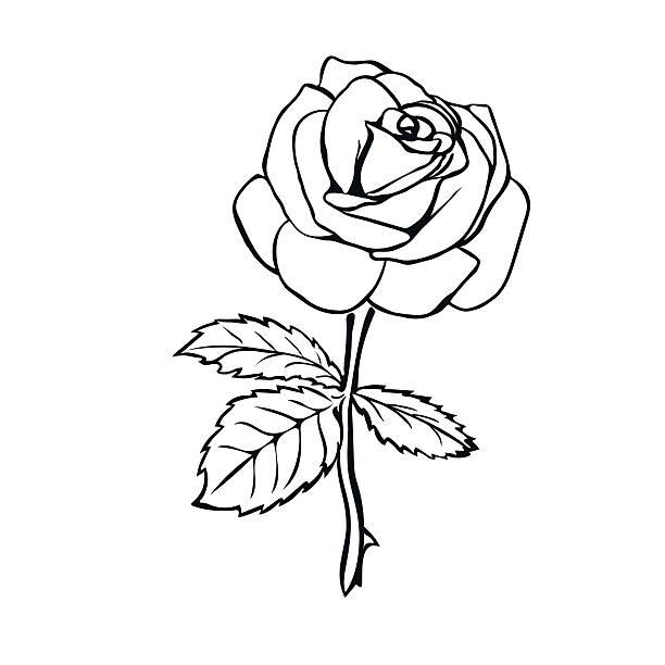 sketsa bunga mawar untuk diwarnai