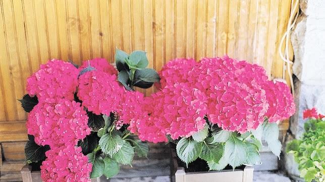 Tellagorri bloc colocados con hortensias - Porros de hortensias ...