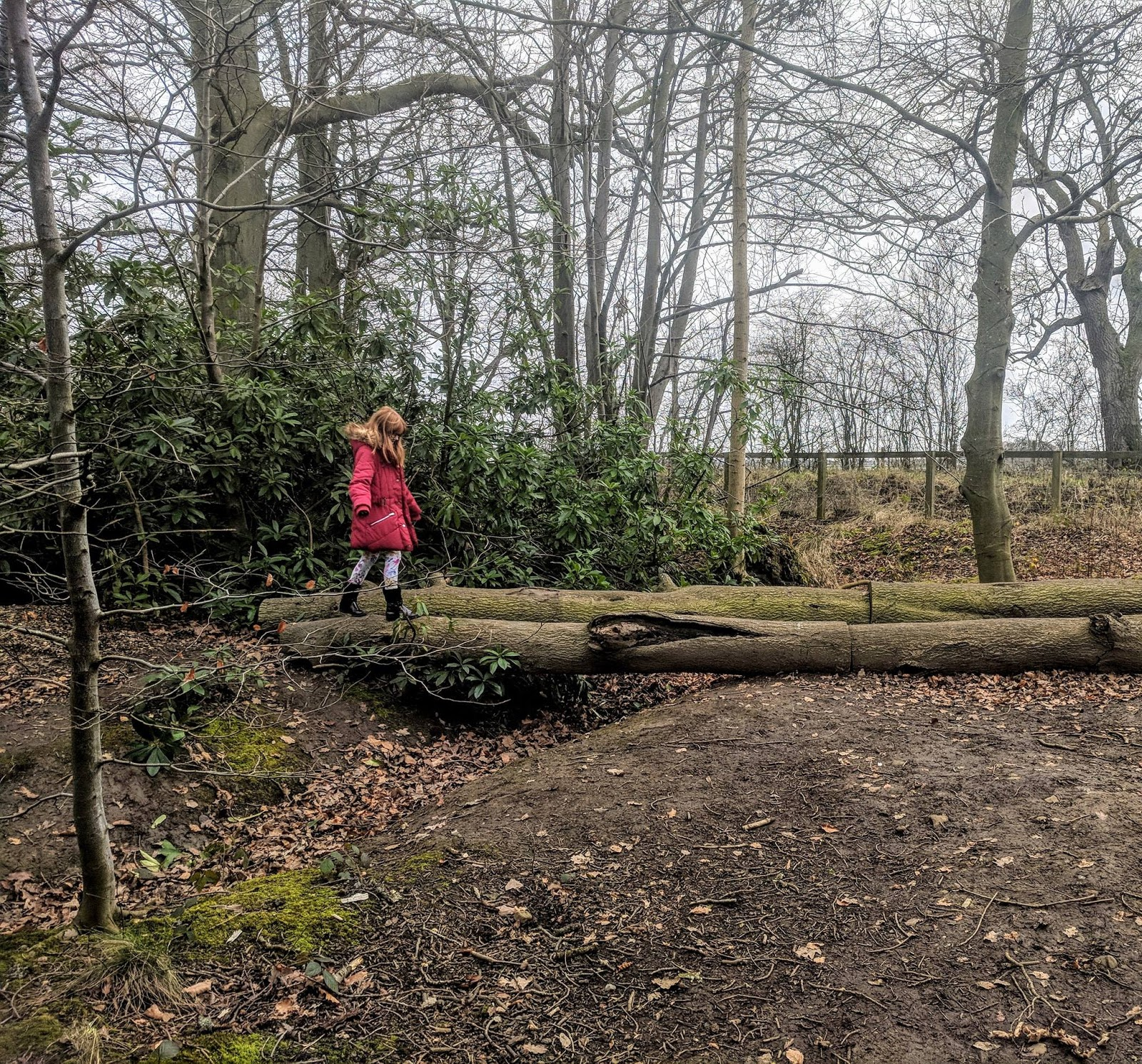 A Guide to Visiting Bolam Lake, Northumberland  - walking on a log
