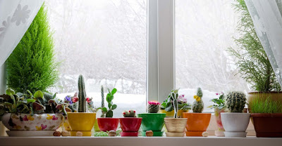 A variety of plants in colorful pots on a windowsill looking out a snowy scene