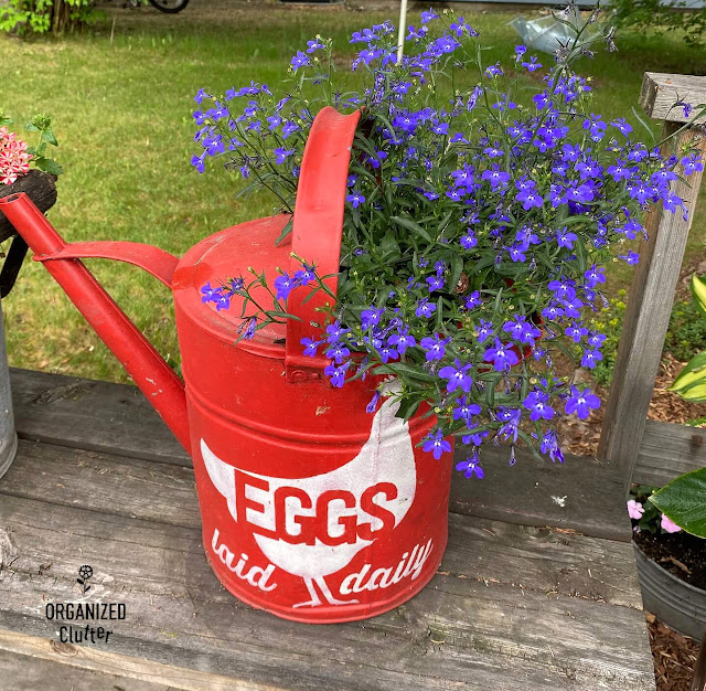 Photo of lobelia planted in a painted & stenciled watering can
