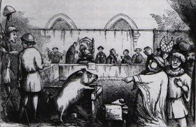 História do Porco
