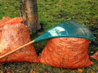 A rake resting on two bags of leaves | Find a chiropractor Ann Arbor